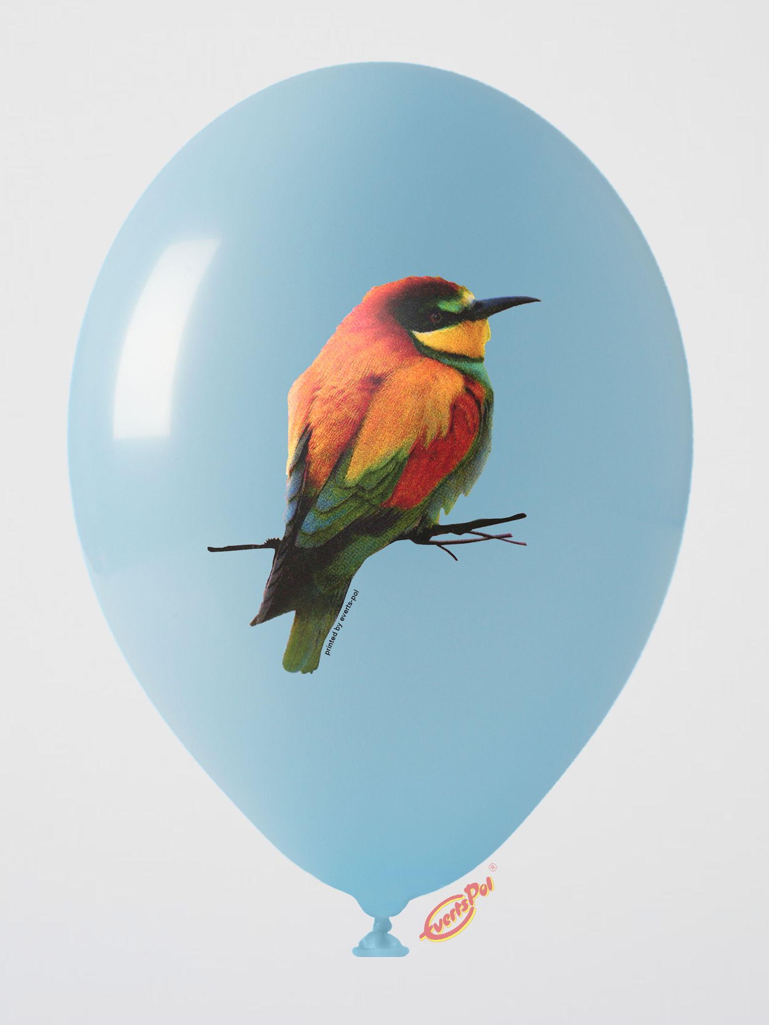 151 bird